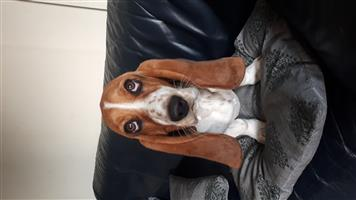 Dog for a good home