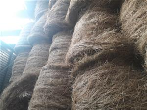 Teff bales for sale 1.2