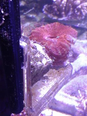 Marine Tank Set ups & Maintenance as well as suppliers of Marine Fish, Corals & accessories